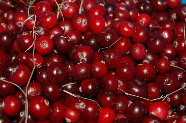 cranberry photo